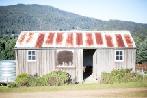 Hartzview Vineyard, Gardners Bay