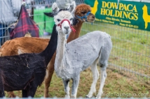 Middleton Country Fair 2015